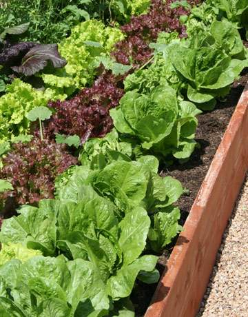 vegetable-garden-GEXPERT-de